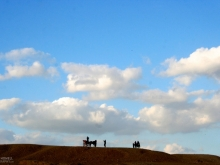 Horses on a Hill