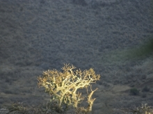 Evening light, Ngorongoro Crater