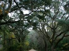 Plantation Drive