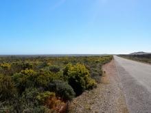 Western Cape Desert